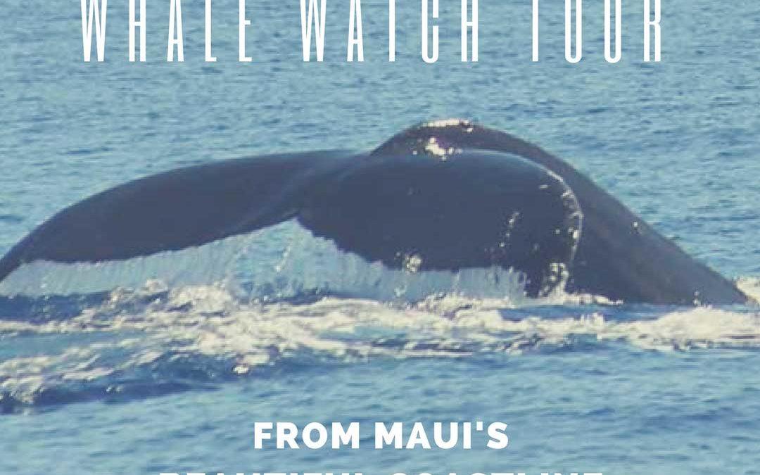 Whale Watch Tour from Maui's Beautiful Coastline