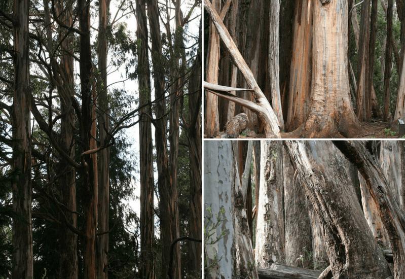 Maui Sightseeing Series – Hosmer's Grove