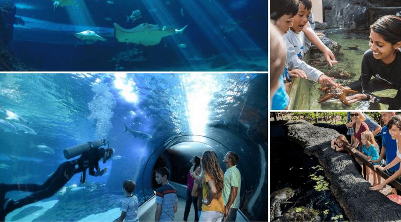 Visiting the Maui Ocean Center