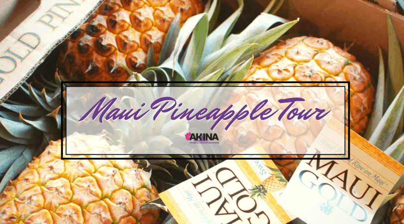 Hot Maui Attraction: Old Hawaii Pineapple Plantation Tour