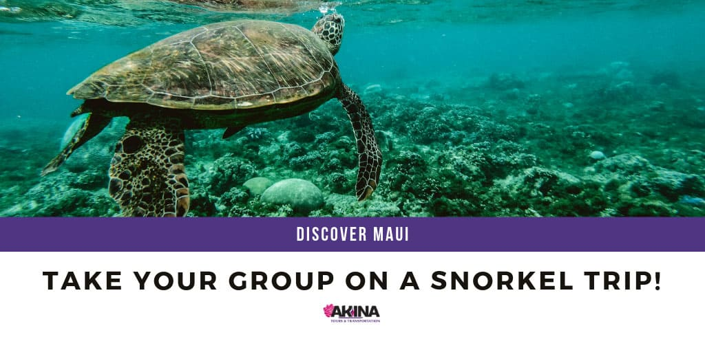 Take Your Group on a Snorkel Trip!