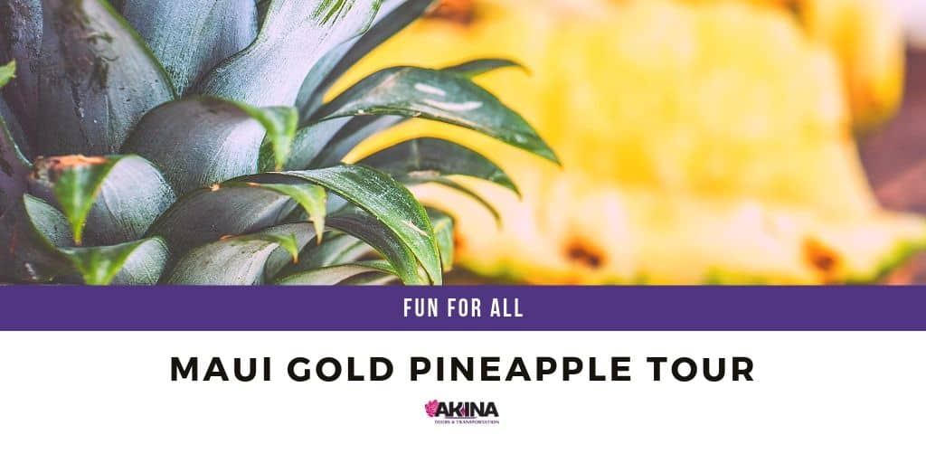 Maui Gold Pineapple Tour is a Fun & Unique Time for All!