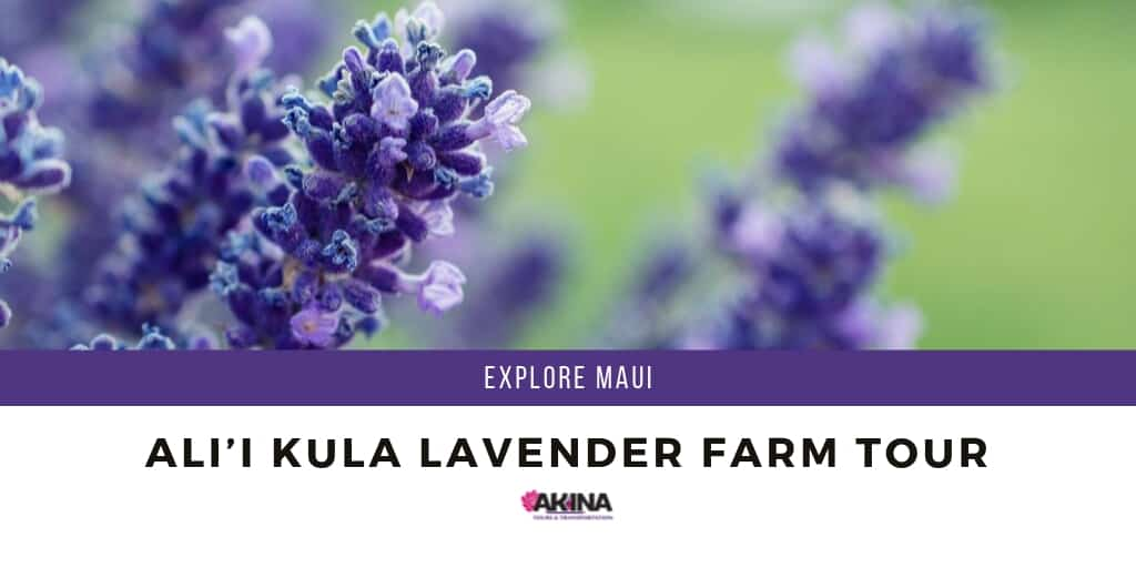 Explore Maui with the Ali'i Kula Lavender Farm Tour