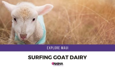 Surfing Goat Dairy Farm is a Fun Way for Your Group to Explore Maui