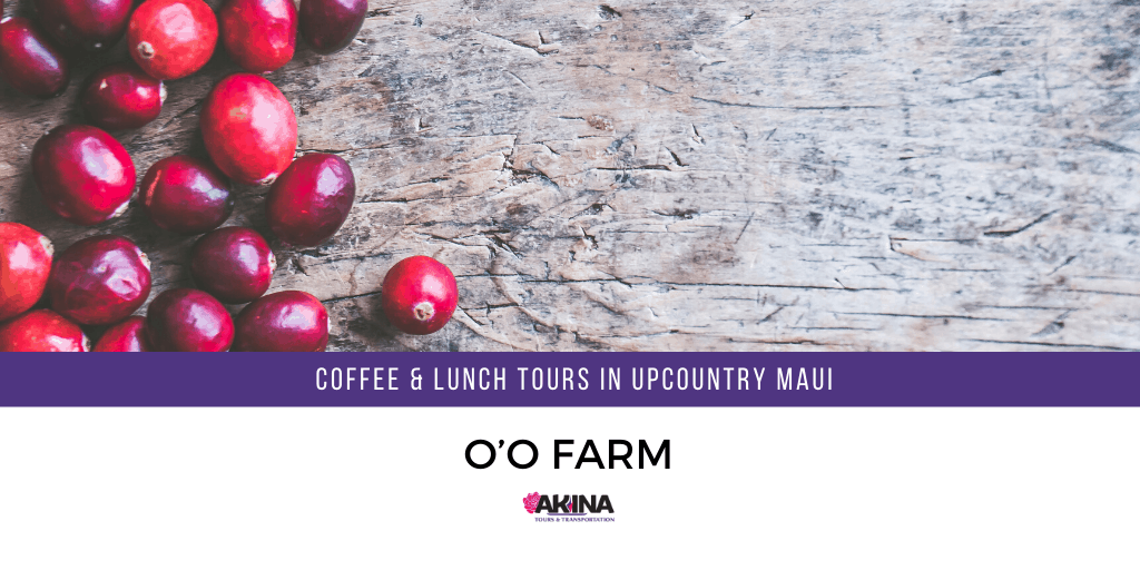 Take the O'o Farm Coffee & Lunch Tours in Upcountry Maui