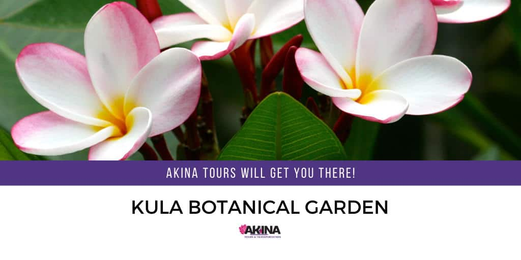Tour the Kula Botanical Garden – Akina Tours Will Get You There!
