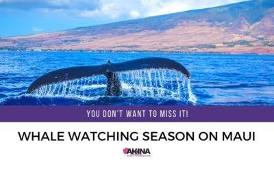 It's Whale Watching Season on Maui and You Won't Want to Miss it!